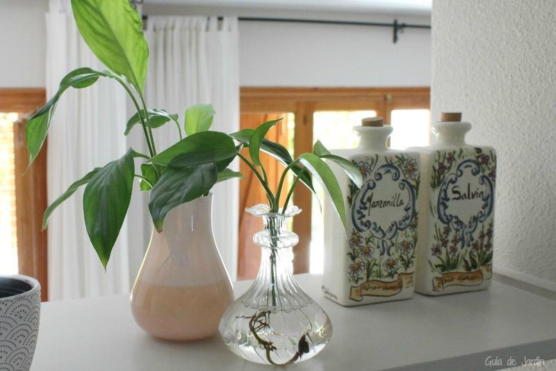 Guia de jardin - Plantas decorativas interior ...