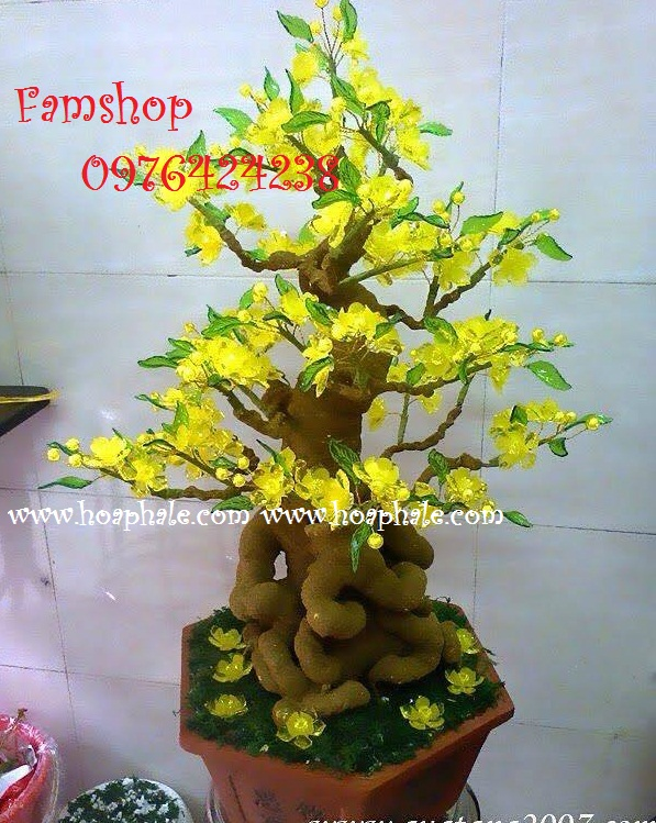 Goc bonsai cay hoa mai tai Tran Kim Xuyen