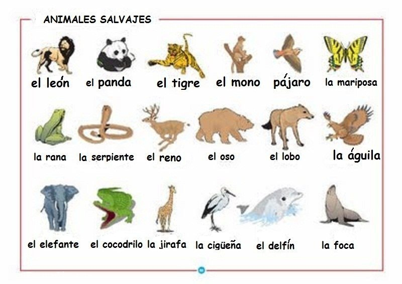 Lobos Perros Siluetas Mamíferos: NUEVO PAÍS, NUEVA LENGUA.: ¿NOS VAMOS AL BOSQUE, AL ZOO