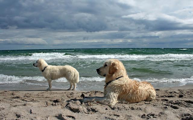 Honden op het strand