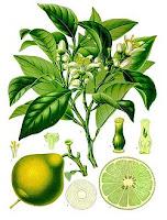 uso de la bergamota en cosmética