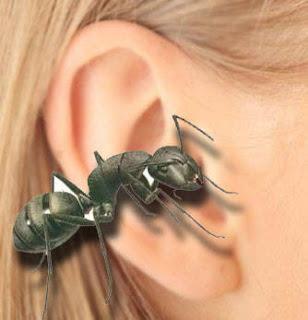 cara mengeluarkan semut yang masuk telinga