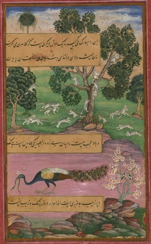 Mughal miniature painting of peacock and other animals 1500s