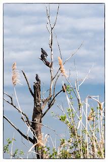 Madarak ülnek egy kiszáradt fán
