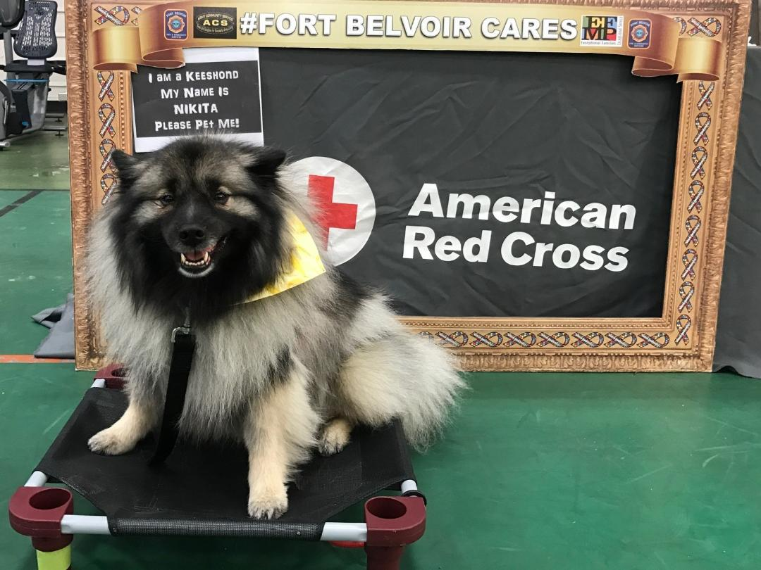 American red cross in the national capital region helping ken vierra who also has been an american red cross first aid cpr and aed basicprofessional rescuers instructor trainer for many years is the proud owner xflitez Choice Image