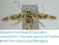 https://sciencythoughts.blogspot.com/2018/04/ephysteris-kullbergi-ephysteris.html