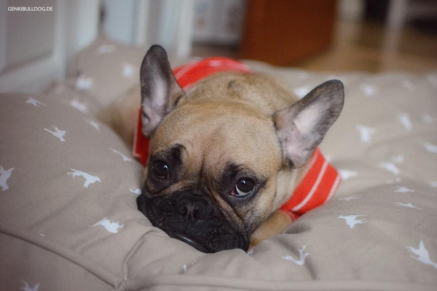 Die Hyposensibilisierung Desensibilisierung beim Hund - Allergie, Hauttest, allergietest, erfahrung, ablauf, Kosten