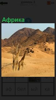 Африка, в которой находятся жирафы и пустыня с холмами