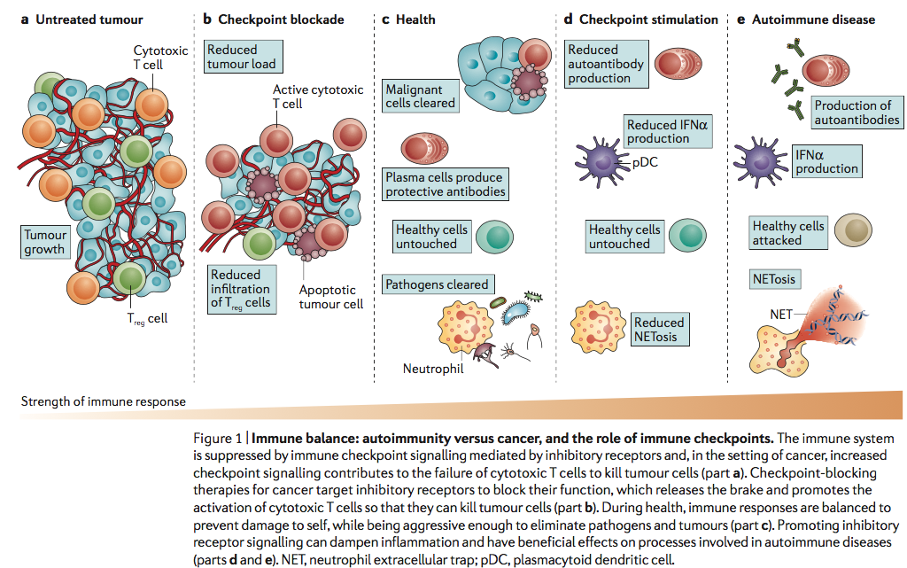 免疫 チェック ポイント 阻害 剤 副作用