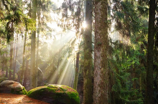 Why Tree Therapy Has Such A Profound Impact On Our Health