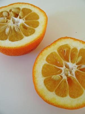 Citrus Aurantium - Laranja Amarga