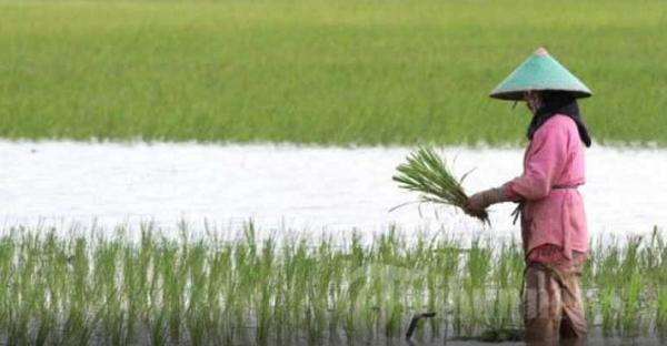 Jangan Malu atau Gengsi Jadi Anak Petani, Rezekinya Lebih Berkah