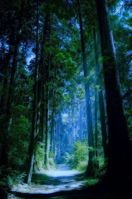 Cute Patterns For Wallpaper Blue Forest Vancouver Canada A1 Pictures