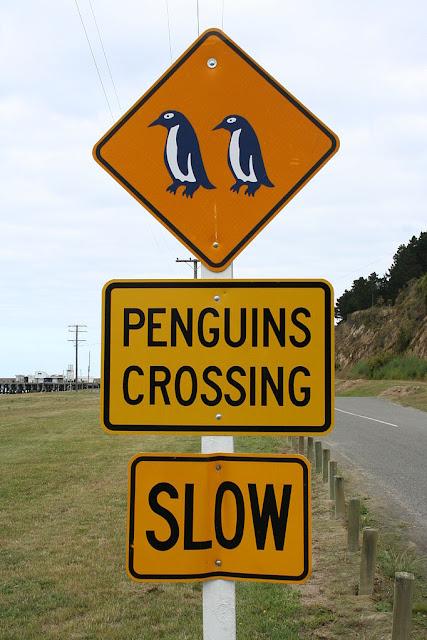 Divertente cartello stradale della Nuova Zelanda che segnala l'attraversamento pinguini