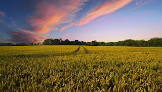 Pertanian Berwawasan Masa Depan