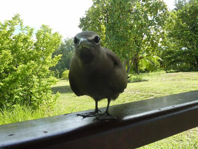 https://voyagestousrisques.blogspot.com/2018/06/la-faune-de-bird-island.html