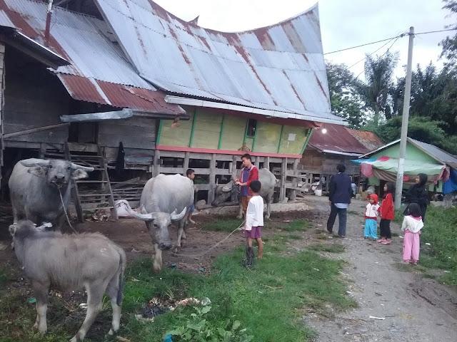 Indahnya Samosir Kampung Ku, Mana Kampung mu ......