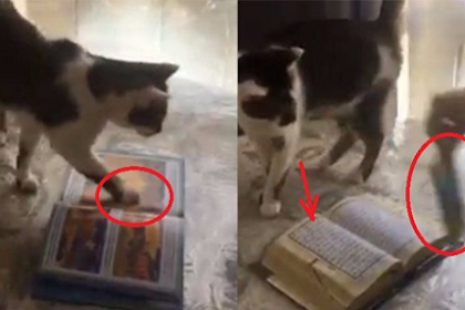 [Video] Dipancing Pakai Makanan Kucing Ini Injak Buku, Begitu Diganti Al-Qur'an, Subhanallah…