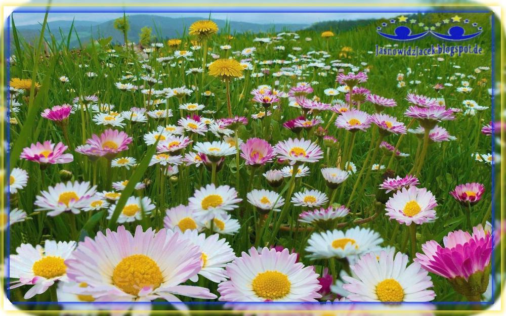 Piękno planety Ziemi - Góry Łąka Stokrotki - Duchowy Uzdrowiciel Berlin