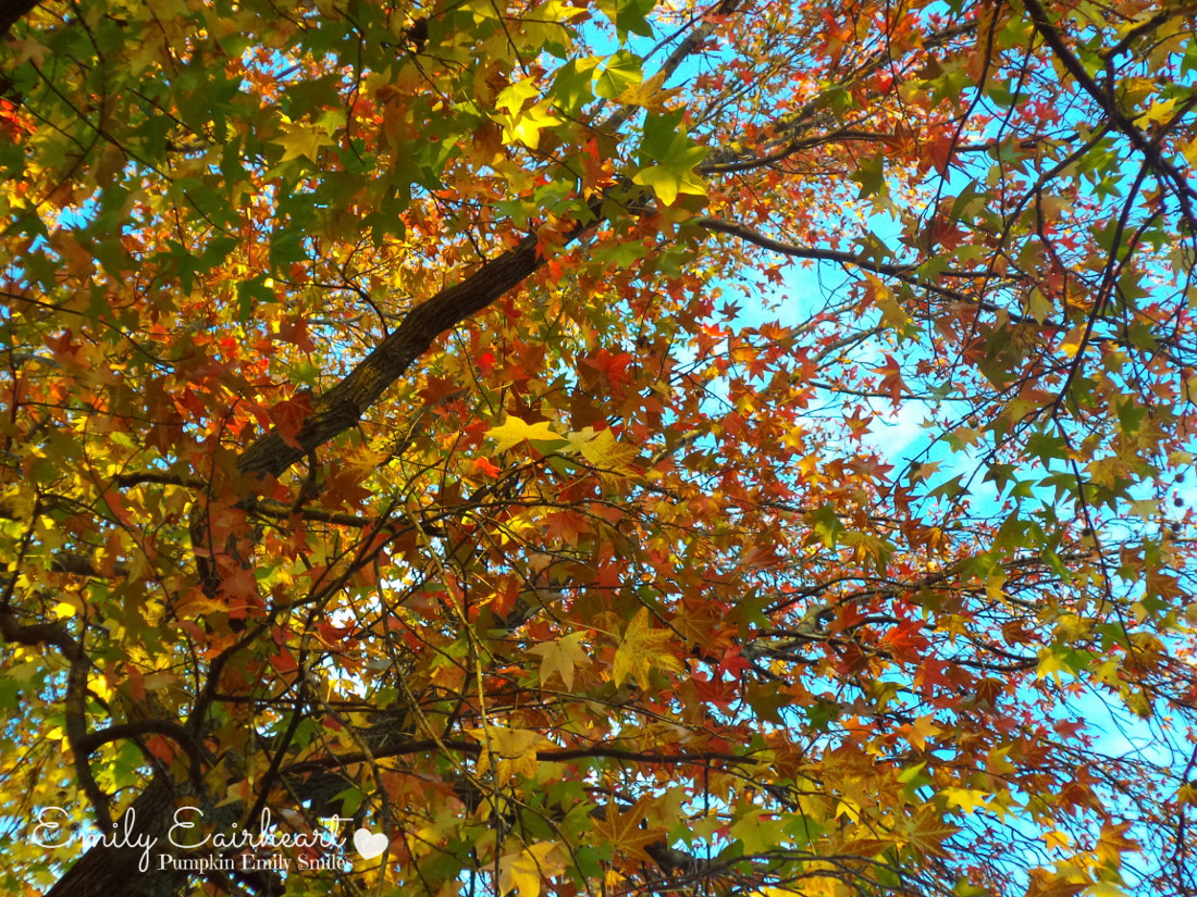 Light green, red, orange, and yellow leaves on a tree.