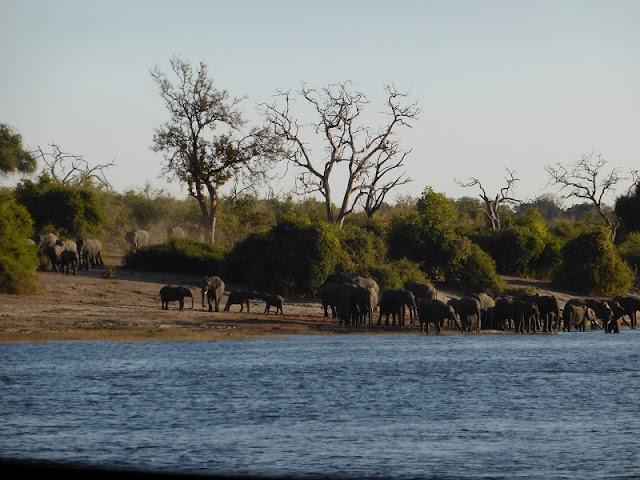 Elefantes preparados para cruzar a la isla