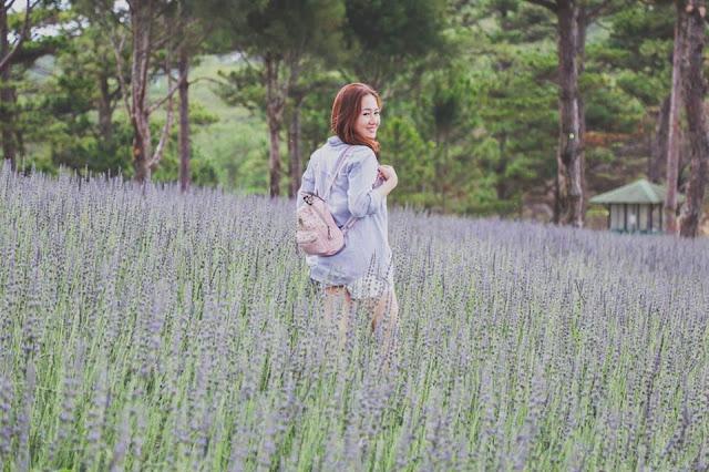 Cánh đồng Lavender tại Thung lũng tình yêu