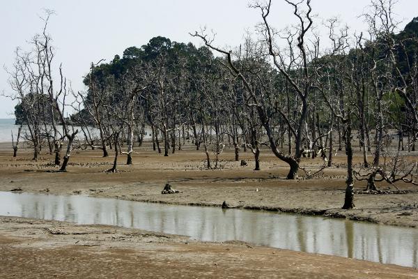 Mangrovenwald im Bako Nationalpark, Borneo