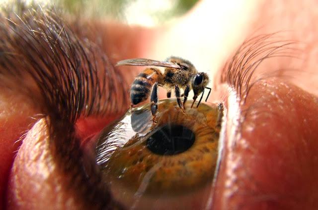 Τα χρώματα που βλέπει η μέλισσα