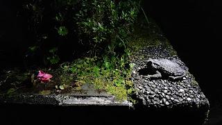 說是夜間獨處,結果還是很多生物跟著一起度過這看似孤獨但熱鬧的時間...