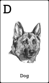 Hewan Anjing dalam Kartu Animal 4D+