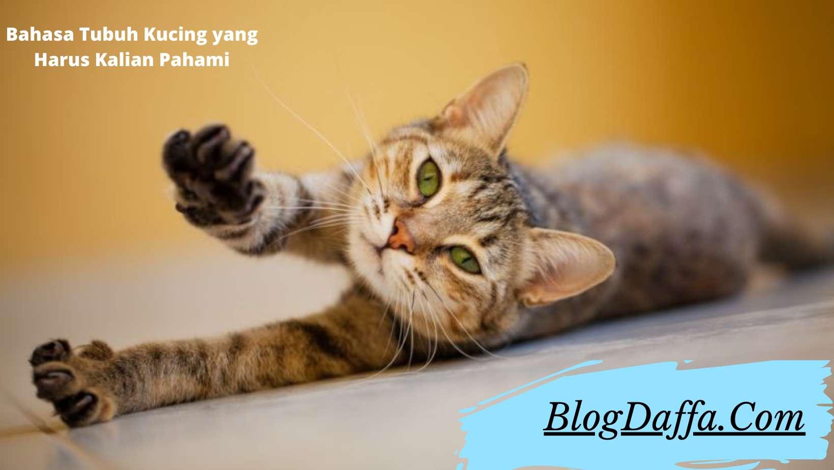 Bahasa Tubuh Kucing yang Harus Kalian Pahami
