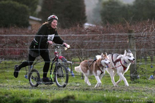 Sue Adams, Palmerston North, competing in the two dog scooter class in the 25th Anniversary Race Weekend organised to celebrate the lower North-Island-based Ridge Runners Dog Racing Club's quarter-century of competition, held at Linden Estate Winery, Eskdale, Napier. photograph