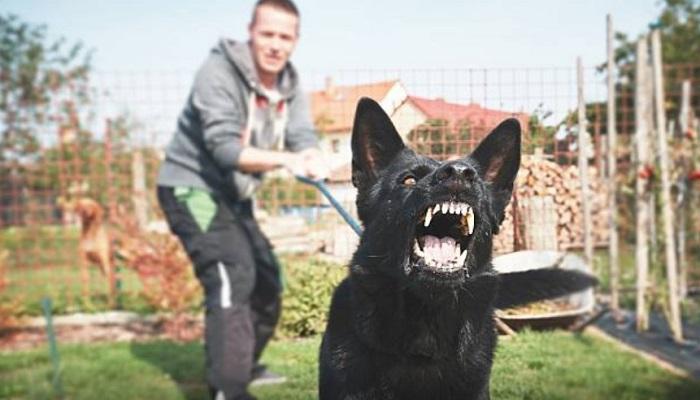 Kenapa Anjing Bisa Membedakan Orang Jahat dan Orang Baik?