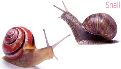 snail creature