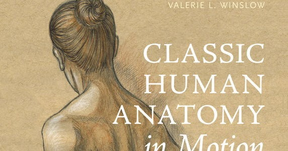 Human anatomy in motion