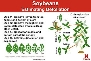 defoliation-guide