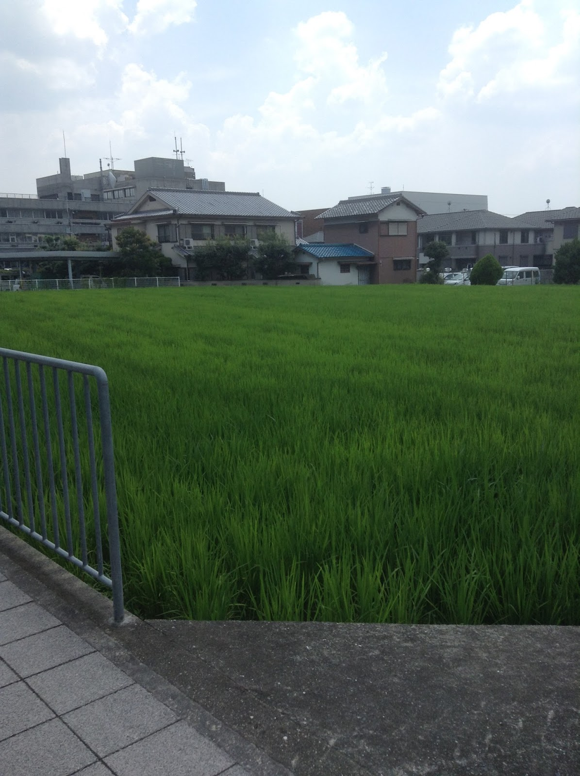 suburban rice paddy, Japan
