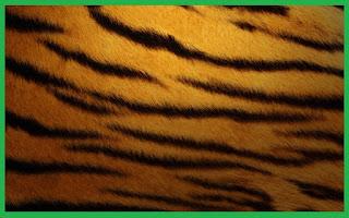 mibebi.com/sepatu kulit macan