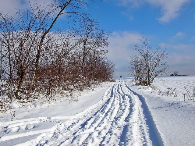 śnieg, pola, krzaki, zima