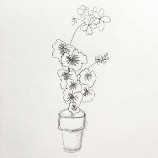 geraniums, sketching, pencil, Anne Butera, My Giant Strawberry
