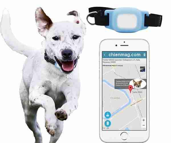 Traceurs GPS pour Chiens
