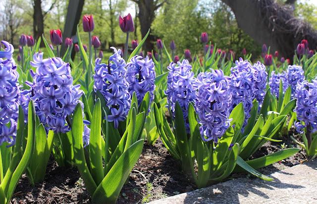 Frühling im Britzer Garten