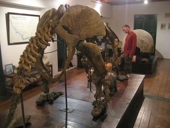 Science Minus Details Extinct American Mammals