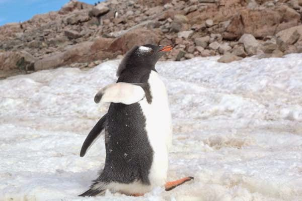 And their adorableness. - He Was Taking Photos Of A Glacier In Antarctica When Suddenly, Out Of Nowhere… WHOA!