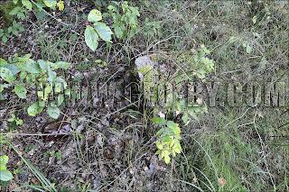 Камень из фундамента польской пограничной стражницы 'Луговатое'