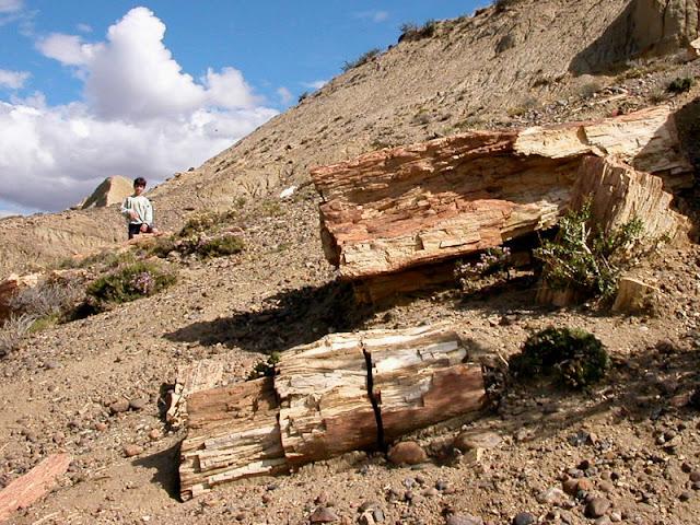 monumento natural Bosques Petrificados