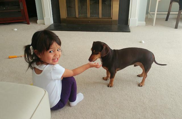 Toddler-and-Dachshund-tasteasyougo.com