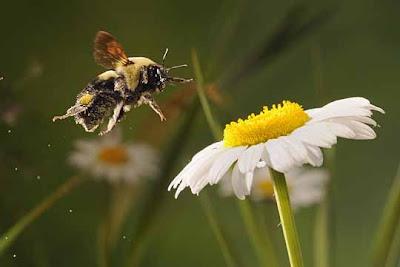 Bunga Api Terbang, Apabila Kita Bersama-sama