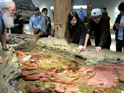 Humans enjoying the touchable tidepool