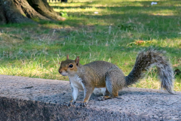 Ein Ausflug nach Washington D.C.und noch ein paar Tage in New York | Squirrel in Lower Senate Park